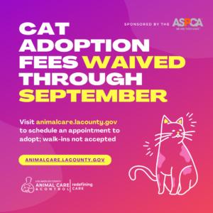 Cat Adoption Fees Waived (September 2020)