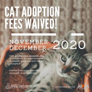 Cat Graphic (Nov & Dec 2020)