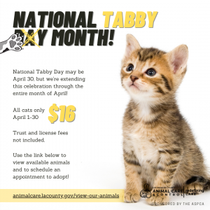 NATIONAL TABBY MONTH